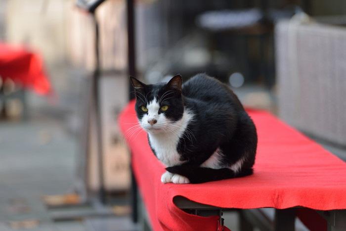 お茶屋にいる猫