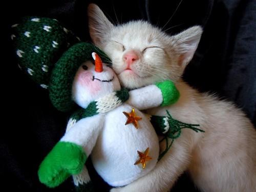雪だるまと子猫