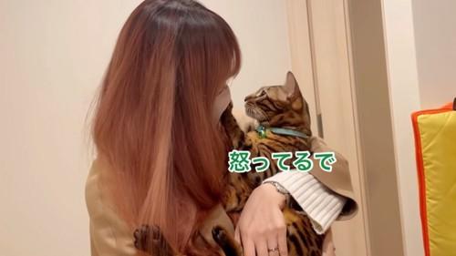抱っこされる緑色の首輪の猫