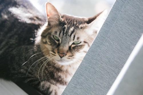 リラックス中の猫