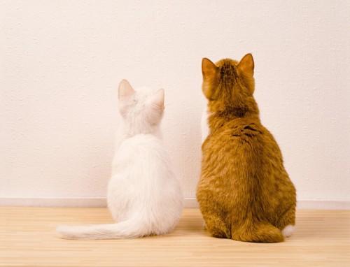 背中を向ける2匹の猫
