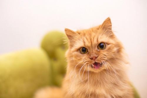 口を開ける茶色の猫