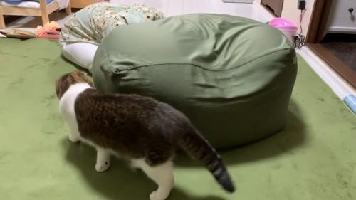 クッションの横を歩いて行く猫