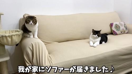 ソファに座る2匹の猫