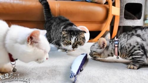 魚のおもちゃの回りに集まる猫