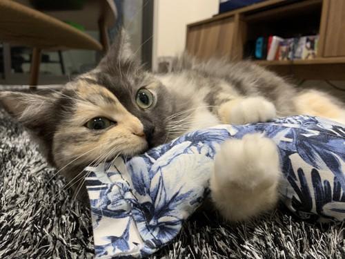 愛猫とぬいぐるみ