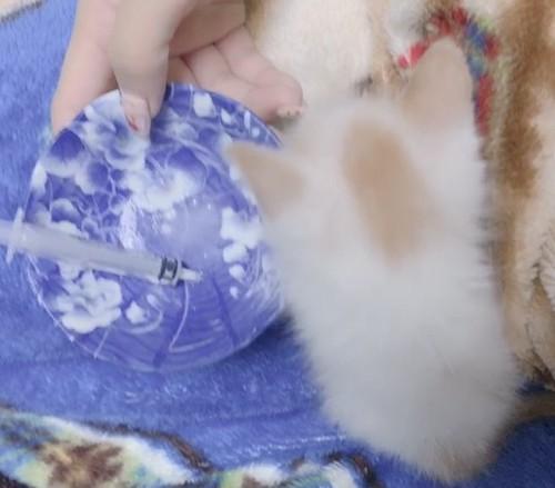 お皿と一緒に並んでる子猫
