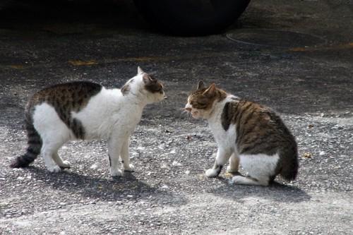 喧嘩しそうな猫たち