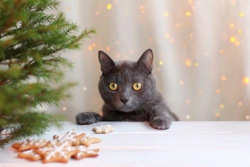 テーブルの上のアイシングクッキーを見るグレーの猫