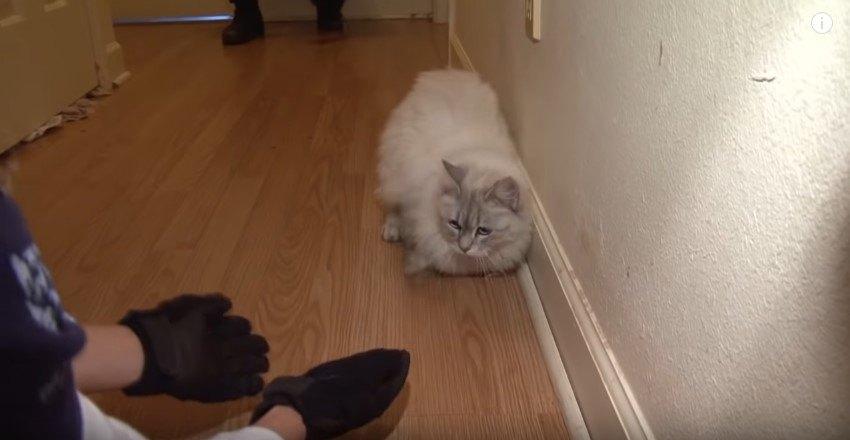 床をはう猫
