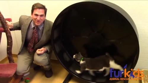 猫を紹介していく