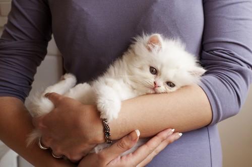 腕に抱きつく猫