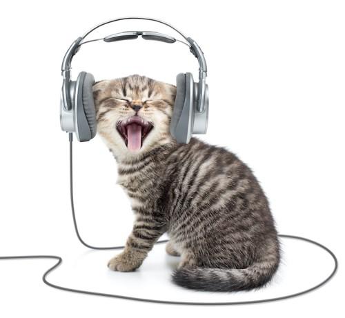 ヘッドフォンをして口を大きく開ける猫