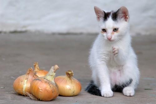 猫とタマネギ