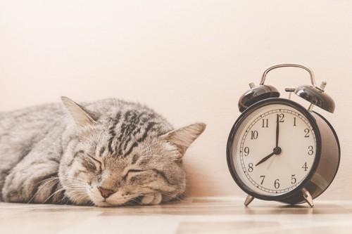 目覚まし時計と眠る猫