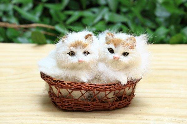 籠に入っている白い猫の人形2体