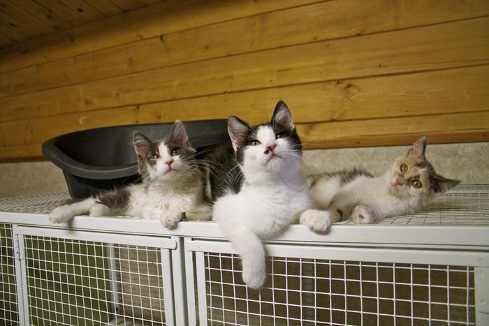 ケージと3匹の猫の写真