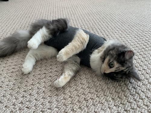 猫が着用しているもの