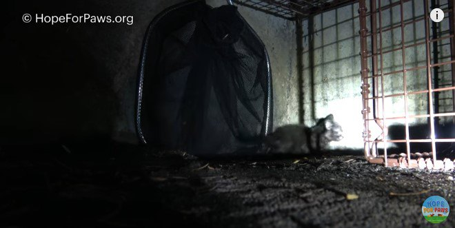 網で穴をふさぐ