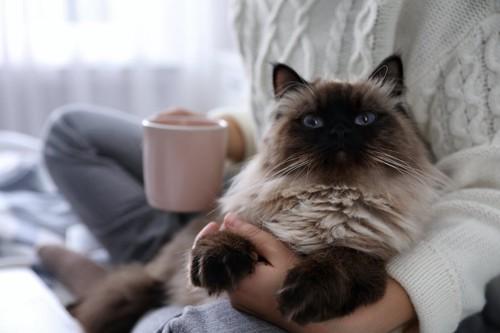カップを持った飼い主に抱かれている猫