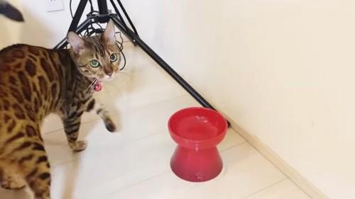 猫と赤色の食器