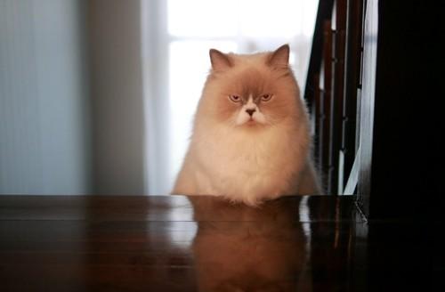 気分の悪そうな猫