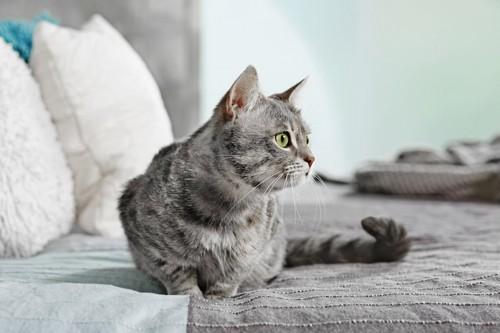ソファーの上に座る猫