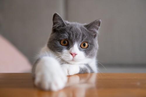 テーブルの上に前足を伸ばす猫