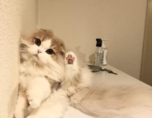 後ろ足を上げる猫