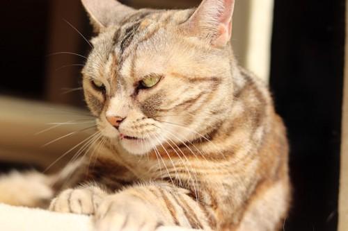 怒り気味の猫