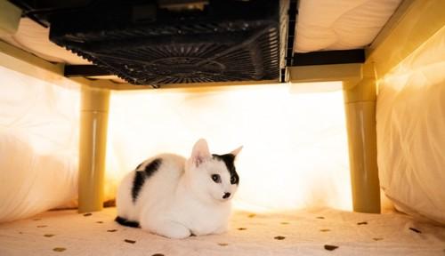 コタツの中の白黒猫