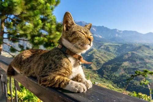 スフィンクス座りをしている猫