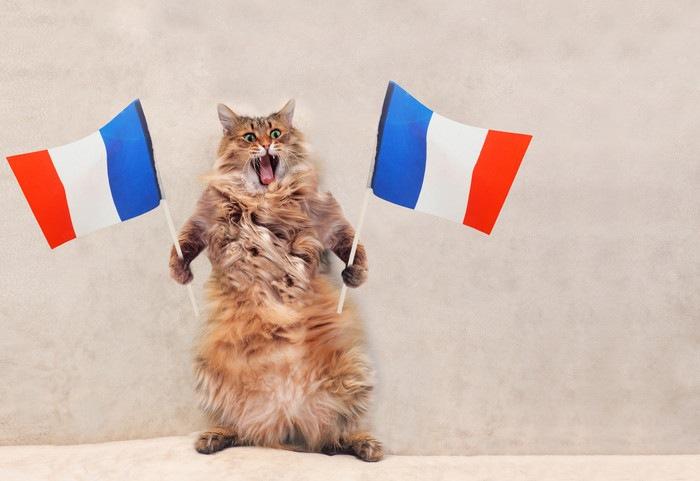 フランスの国旗を持った猫