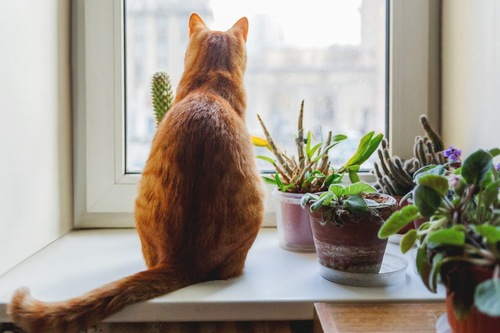 猫の後ろ姿