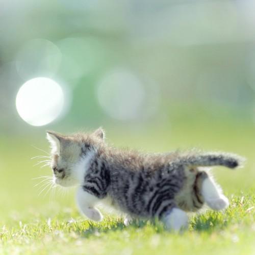 芝生の上を一匹で歩く子猫の後ろ姿