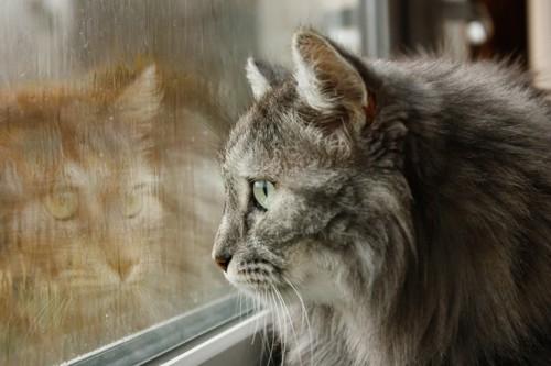 外の雨を見る猫