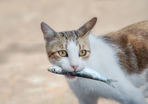 魚に噛み付く猫