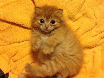 看板猫ピグモン