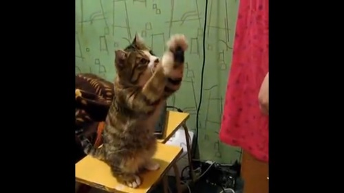 お願いする猫