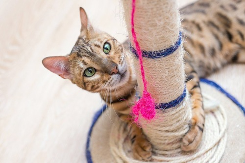 麻の爪研ぎ台と猫