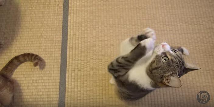 よそ見しながらおねだりポーズする猫