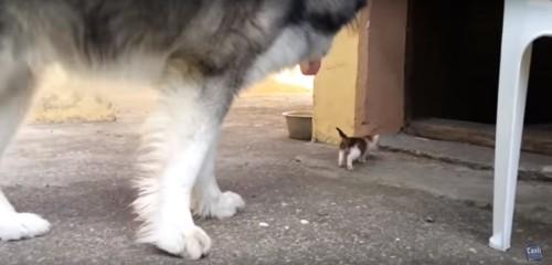 子猫を見送る犬