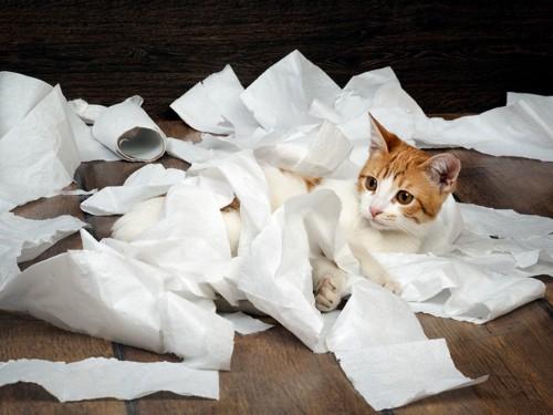 トイレットペーパーにまみれる猫