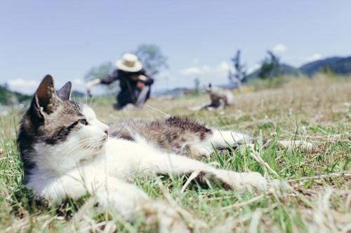 草原で寝転ぶ猫と農家の女性