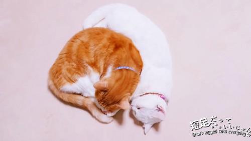 丸くなる茶猫とくっつく白猫
