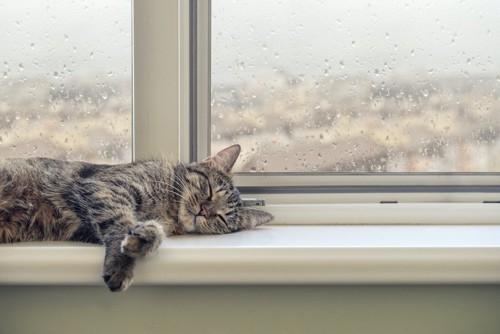 水滴の付いた窓辺で眠る猫