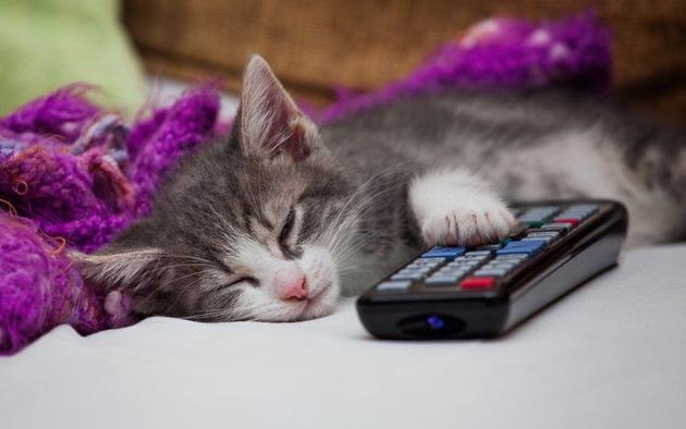 リモコンに手をおいている猫
