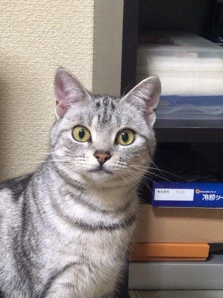 まん丸な瞳でこちらを見つめる猫