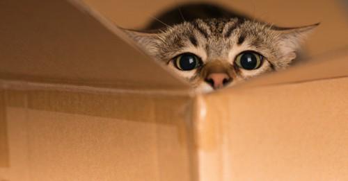 段ボール箱に隠れる猫