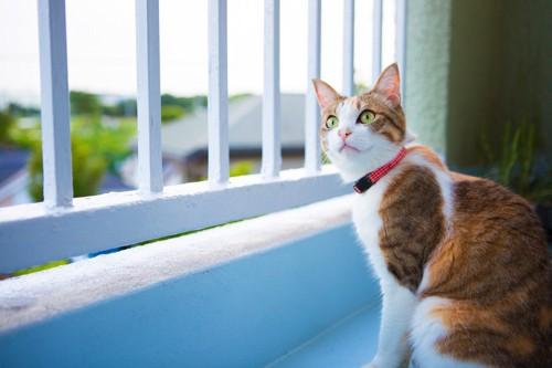 ベランダで座る猫
